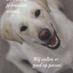 hondenpension
